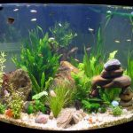 Clean Small Aquariums Regularly To Maintain Healthy Fish