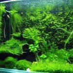 Are The Aquarium Scenery Natural Or Artificial?
