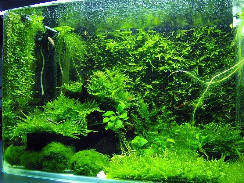 Are The Aquarium Scenery Natural Or Artificial?