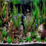 How To Set-Up A Freshwater Aquarium?