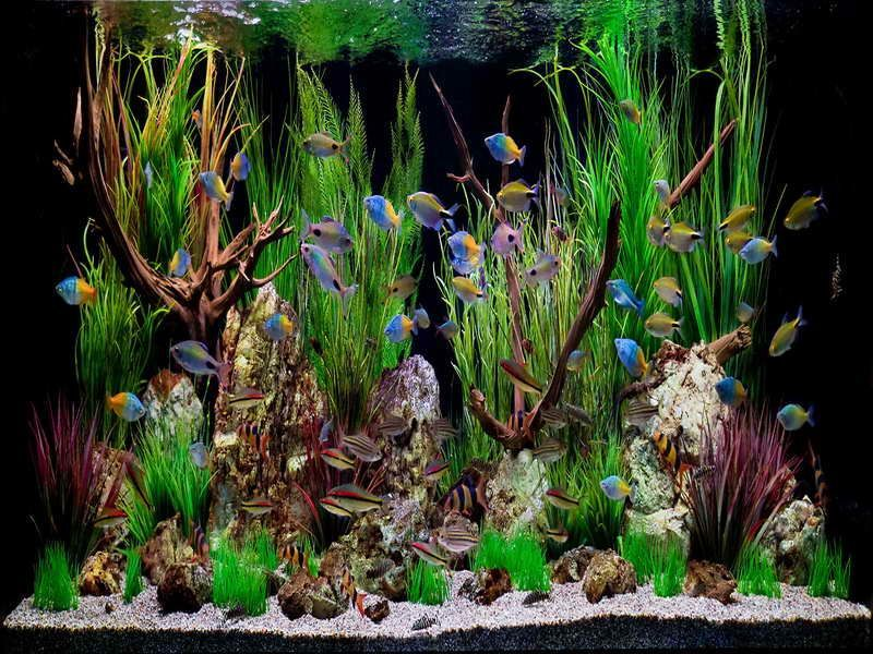 How To Set-Up A Freshwater Aquarium?