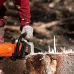Obtain from a Tree Service
